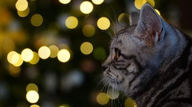 Хозяева долго издевались над котом, но однажды он придумал, как отомстить