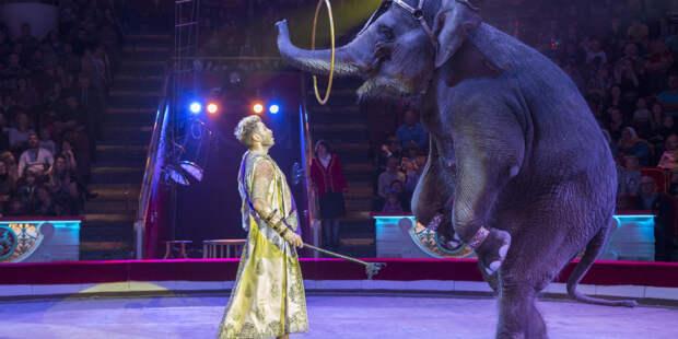 «Цирк – это образ жизни»: Андрей Дементьев-Корнилов о дрессировке слонов, сафари-парке и отношении к животным