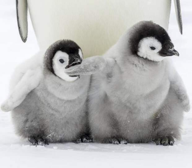 20 милых и глупых выходок животных, которые заставят от души улыбнуться