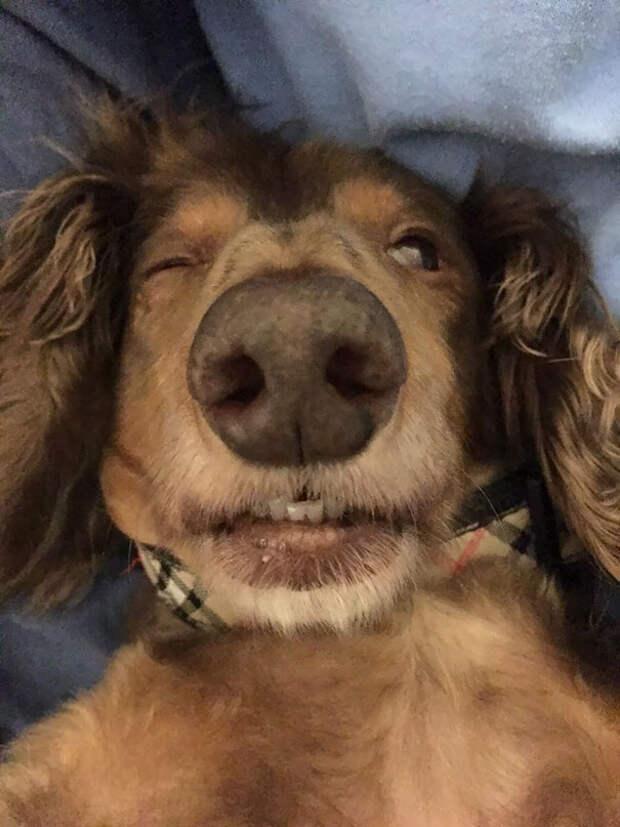 30 веселых фотографий животных, которые только что вышли от ветеринара