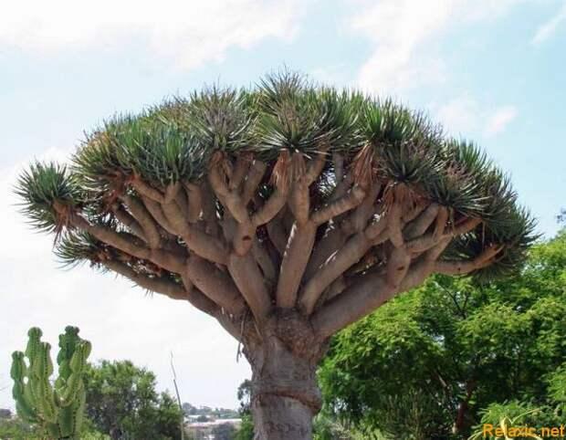 Socotra_006