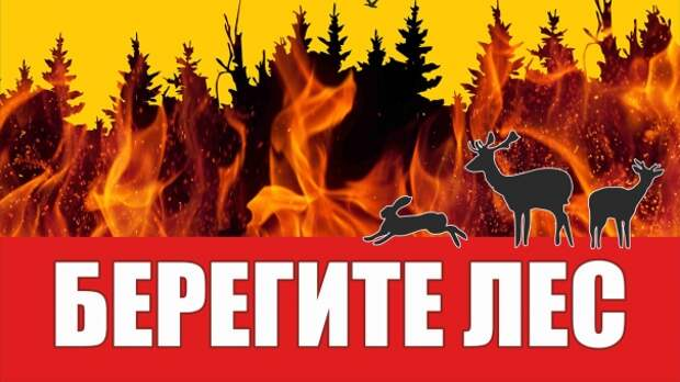 В Крыму стало меньше лесных пожаров