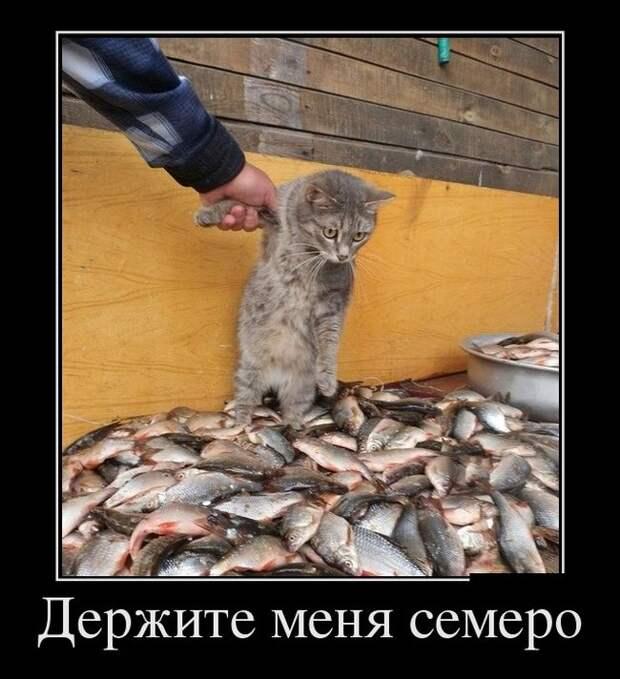 1е марта - Всемирный день кошек