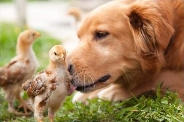 Животные на позитиве
