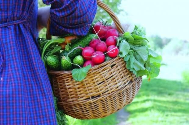 Витамины с грядки. Какие огородные овощи самые полезные?