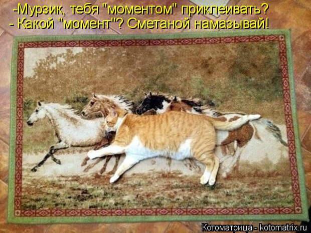 1586540470_kotomatrica-3 (600x450, 207Kb)