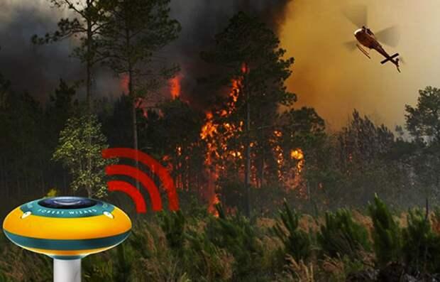 Что спасет леса от пожаров?