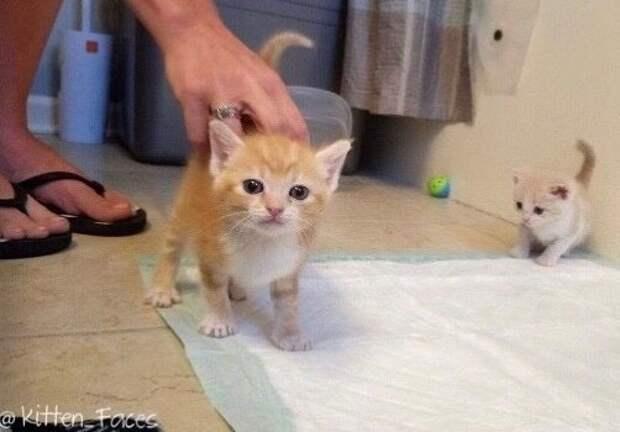 Ветеринар отказался усыплять кошку и решил помочь воссоединить её с котятами