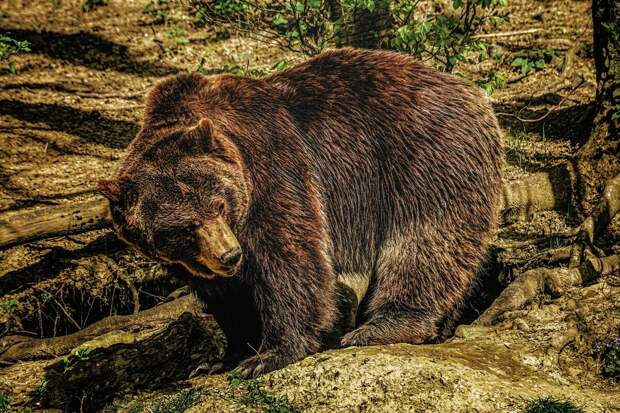 6 особенностей из жизни медведей, которые могут удивить