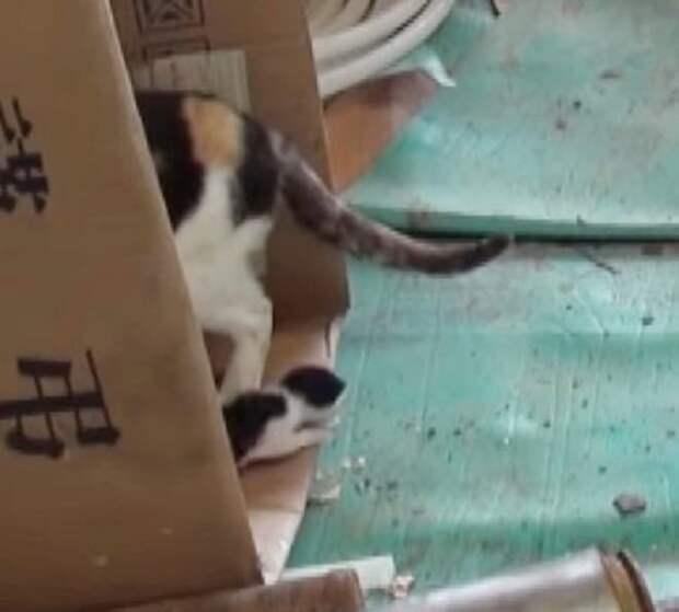 Кошка сидела у старого дома, а к ее лапе был привязан живой котенок