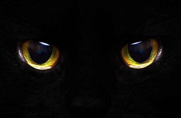 Почему некоторые животные видят в темноте