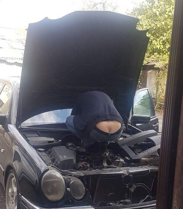 Иногда под капотом можно обнаружить самых странных существ авто, автомобиль, живность под капотом, неожиданная встреча, неожиданно, неожиданность, под капотом