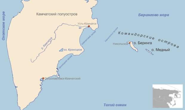 Распространение голубого медновского песца