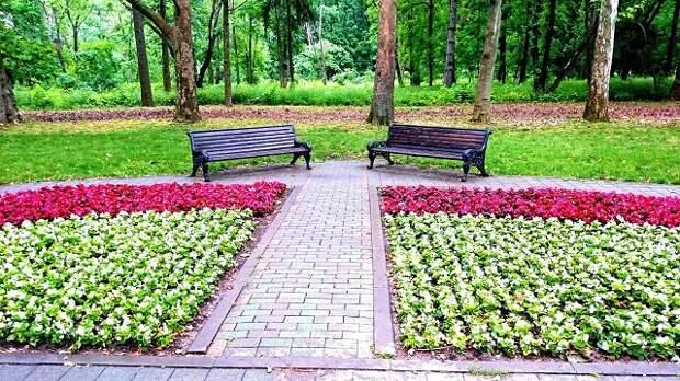 В Краснодаре к июню высадят 330 тысяч цветов
