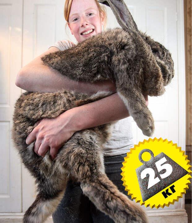 Фото №2 - Кто сказал «Вау!»: шокирующе огромные животные-переростки