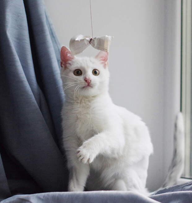 Чудесный котенок Снежок ищет дом.
