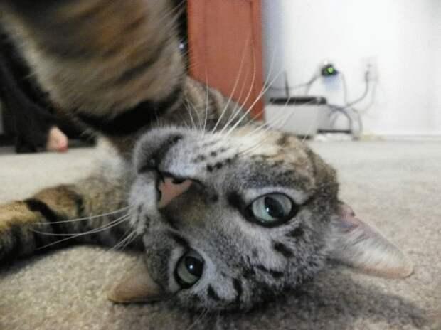 10 забавных случаев, когда коты научились делать селфи