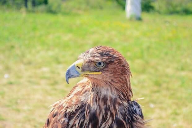 В Удмуртии появится наказание за уничтожение краснокнижных животных и растений