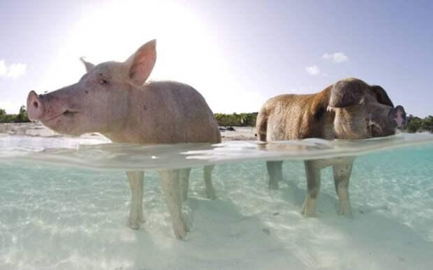 10 островов, которые прославили животные