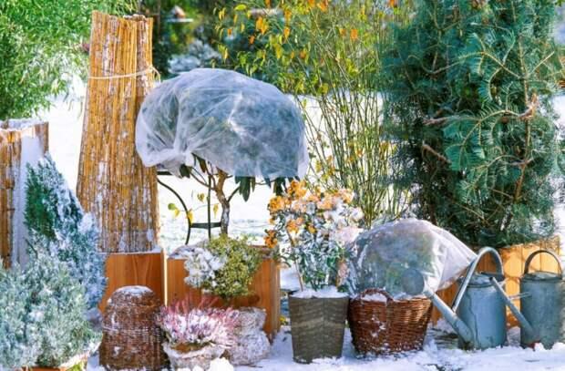 Готовим цветники к зимним холодам