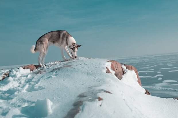 20. Я на вершине мира жизненная позиция, жизнеутверждающие, канада, собаки, философия жизни, фото собак, фотограф, хаски