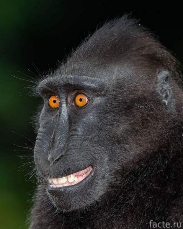 обезьяна близко