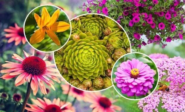 8 садовых растений, которые невозможно убить