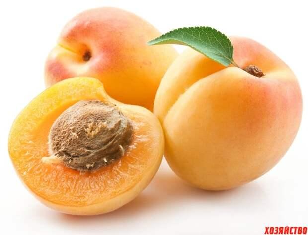 Выращиваем персики, сливы и абрикосы из косточек