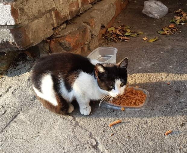 Котя очень красивая и ласковая, у вас дома она превратится в самую любящую и нежную кошечку на свете!