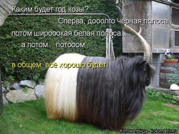 Котоматрица: Каким будет год козы? Сперва, дооолго чёрная полоса... потом широоокая белая полоса... ...а потом... потооом... в общем, всё хорошо будет!