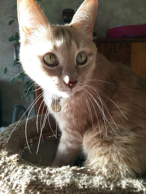Идентификация кошки: адресник или микрочип?