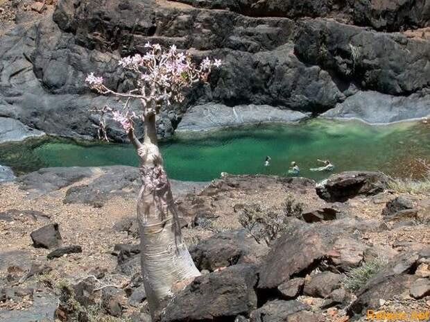 Socotra_010