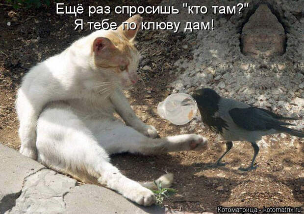 1586540463_kotomatrica-2 (640x453, 227Kb)