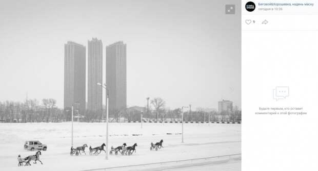 Фото дня: противостояние коней