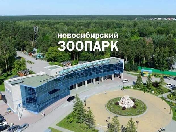 В Новосибирском зоопарке появились саки