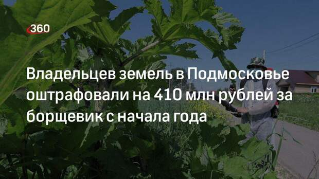 Сумма штрафов за борщевик в Подмосковье превысила 410 миллионов рублей с начала года