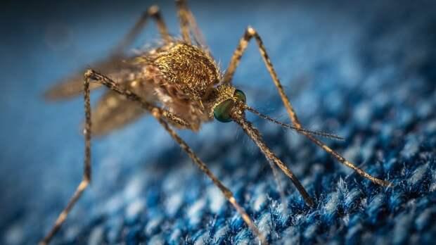 В США выпустили на волю тысячи генетически модифицированных комаров
