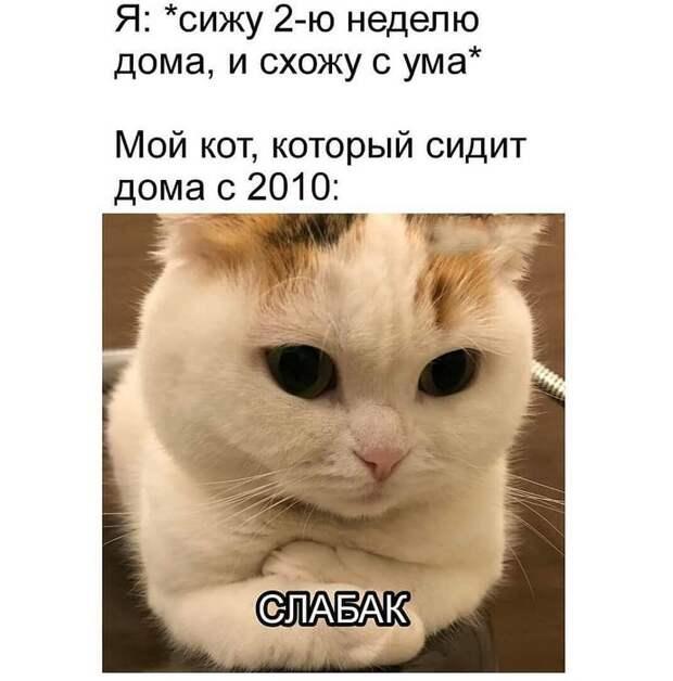 Подборка мемов о коронавирусе и карантине, которые скрасят период самоизоляции