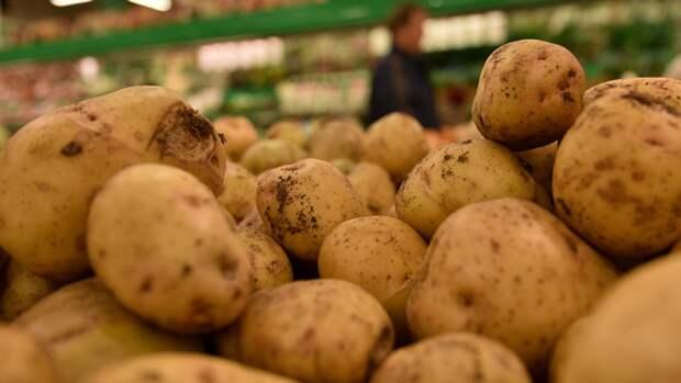Власти РФ ищут способы снизить цены на картофель и другие овощи