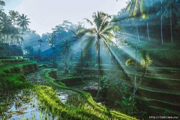 Тайны Бали: 8 причин ехать на остров именно в сезон дождей