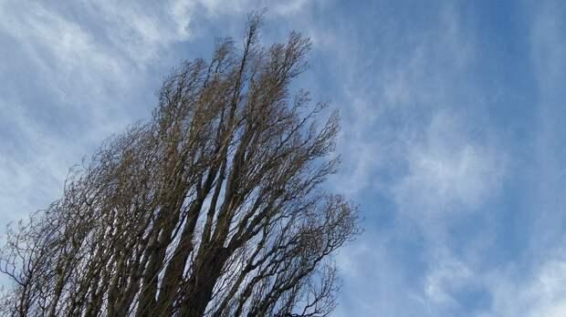 Жителей Удмуртии предупредили о сильном ветре