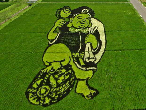 landart08 Необыкновенные картины на рисовых полях