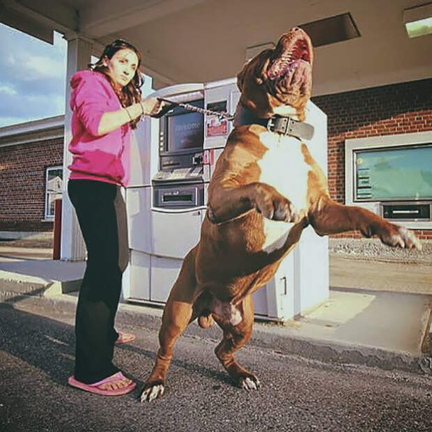При первых же признаках опасности охранник подает сигнал Охранники, банкомат, безопасность, деньги, друзья человека, животные, охрана, собаки