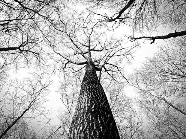 Леса, Деревья, Отраслей, Навес Дерево, Голые Деревья