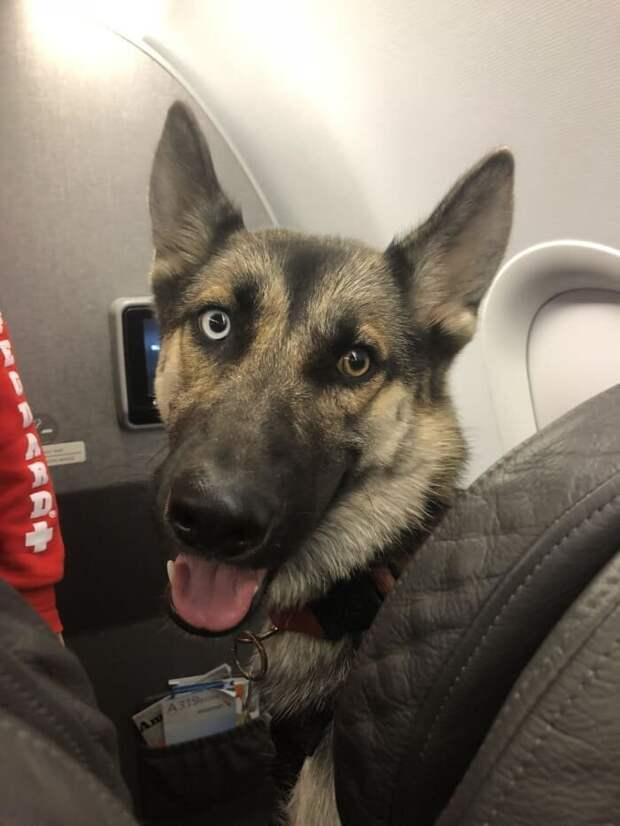 16. ... и улыбки животные, пассажир, салон, самолет, собака, фотография