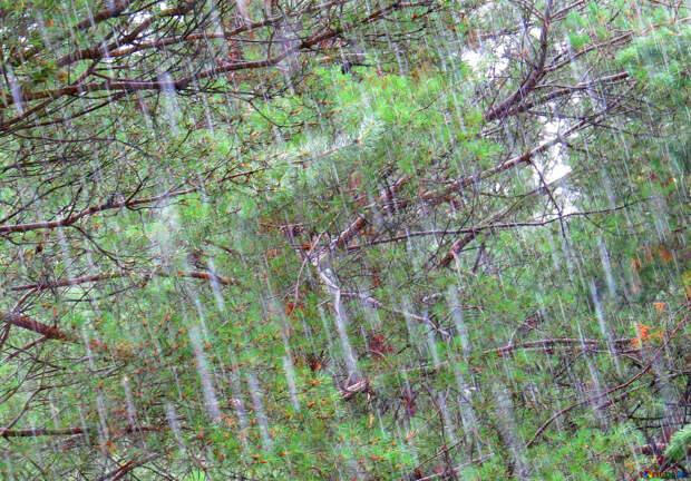 Погода в Удмуртии: в четверг дожди ожидаются по всей республике