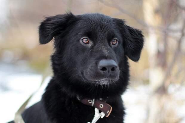 Собака с потерянным взглядом просилась погреться к людям в подъезд