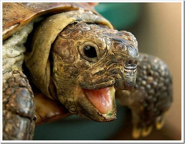 Невероятные приключения агрессивной черепахи и рыжего кота