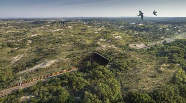 Замечательные экодуки, ежегодно спасающие жизни диких животных (36 фото)