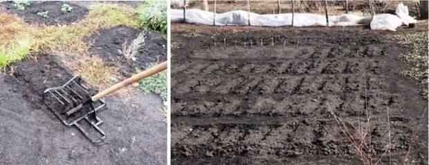 Весной обработанные вилами гряды достаточно взрыхлить плоскорезом и забороновать граблями